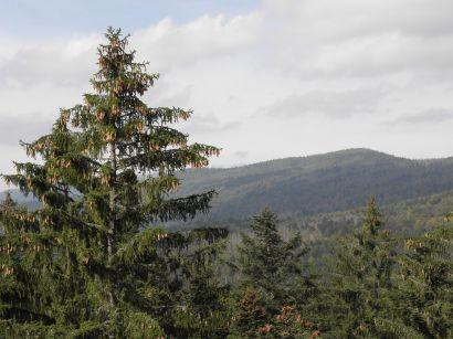baumkronenpfad-nationalpark-ausblick-wald-berge-410
