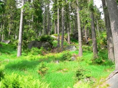 dreisessel-bayerwald-berge-bergwandern-bayerischer-wald-ausflugsziel