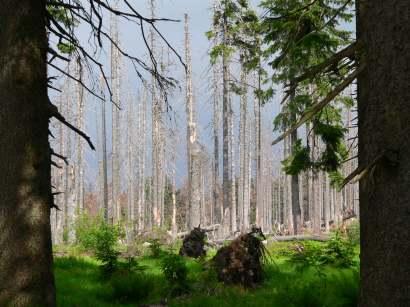 dreisessel-bayerwald-berge-bergwandern-bayerischer-wald-natururlaub