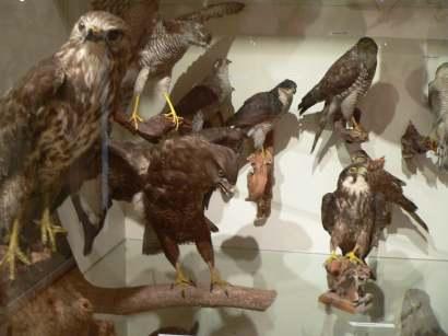 freyung-sehenswertes-museum-schloss-wolfstein-tiere