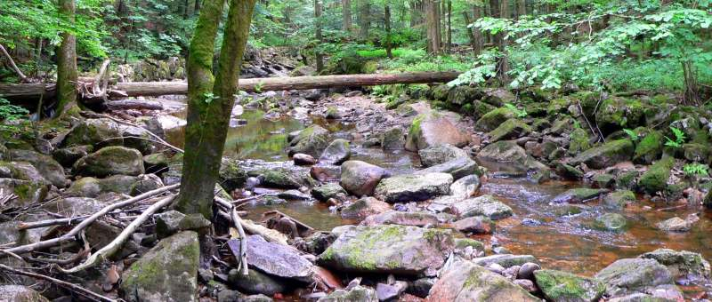 Buchberger Leite Wildbachklamm in Bayern im Bayerischen Wald