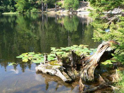 Sehenswertes am Arbersee Natur Bilder und Fotos