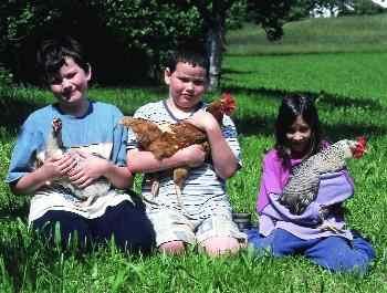Bauernhof Tiere Hühner