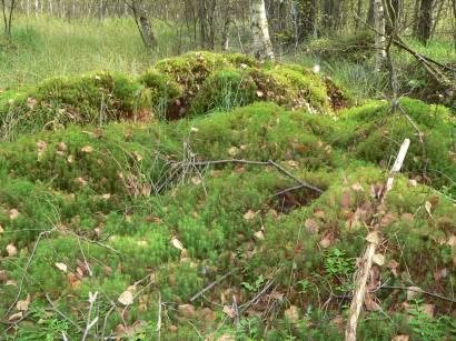 kulzer-moos-prackendorfer-moos-moor-landschaft