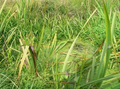 Wandern im kulzer moos prackendorfer moos bayern moor for Moos bilder pflanzen