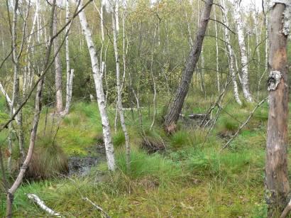 kulzer-moos-prackendorfer-moos-naturschutzgebiet-wald