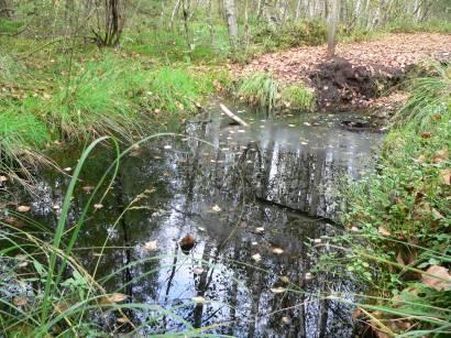 kulzer-moos-prackendorfer-moos-oberpfalz-naturschutzgebiet-moor