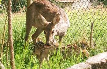 Deutschland Jagdreisen im Bayerwald - Jagen im Urlaub in Bayern - Pirsch im Wald