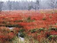 Prackendorfer und Kulzer Moos im Oberpfälzer Wald