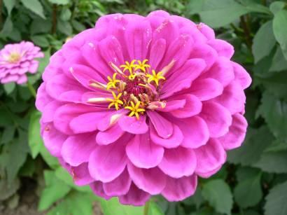 Natur bilder blumen blumenbilder gartenblumen
