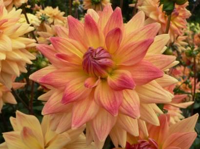 natur-bilder-blumen-blumenfotos-gartenblumen