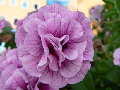 Blumenbilder aus bayern aus dem blumenpark farben frohe