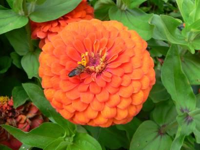 natur-bilder-blumen-cliparts-blumenfotos