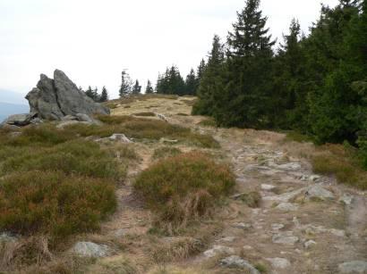 osser-bayerischer-wald-berg-wandern-osserwiese