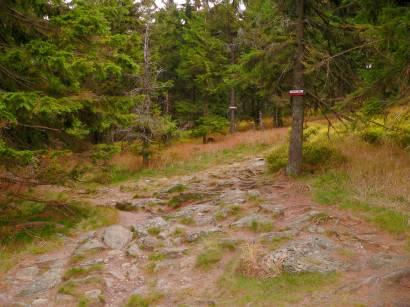 Gut ausgeschilderte Wanderwege und Wanderrouten auf den Osser