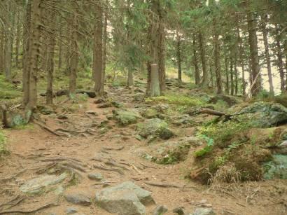 osser-bayerischer-wald-natururlaub-bäume-wälder