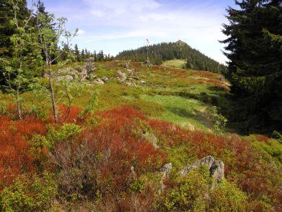 osser-bayerwald-berg-wandern-bergwandern-osserwiese-urlaub