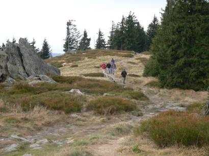 Die Osserwiese - eine waldfreie Fläche mit bizarren Felsen unterhalb vom kleinen Osser Berg Gipfel
