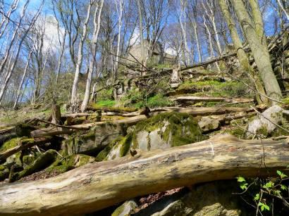rötz-schwarzwihrberg-naturwaldreservat-bayern-oberpfalz