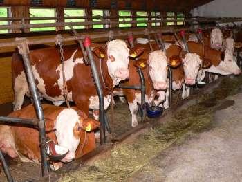 Bauernhofurlaub in Drachselsried im Zellertal Übernachtung
