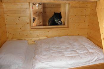 Urlaub eigenes Pferd versorgen - Fenster zum Pony Stall