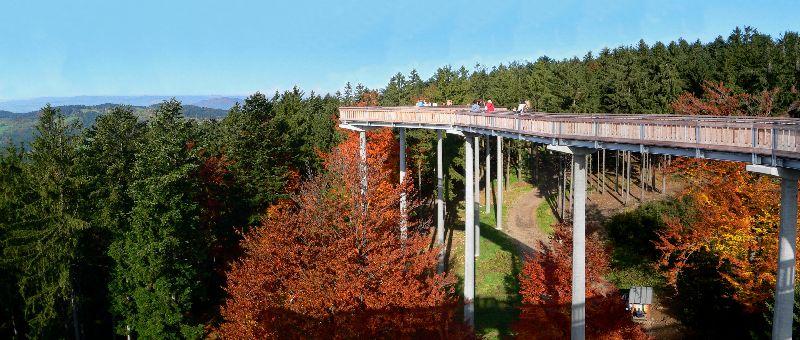 wald-wipfel-pfad-bayern-lehrpfad-aussichtspunkt-panorama-800