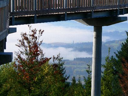 wald-wipfel-weg-baumkronen-pfad-nebel-landschaft-410