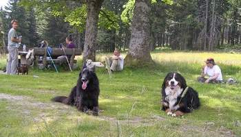 Familienurlaub mit hund dreil ndereck deutschland for Pension mit hund nordsee