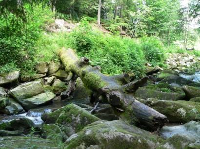 Bilder und Fotos Saussbachklamm Waldkirchen in Freyung Grafenau