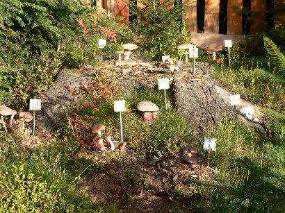 waldwipfelweg-naturlehrpfad-pilzkunde-natur-erlebnispfad-410