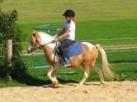 Bayern Ferienhof für Kinder Reiterferien Bayerwald Urlaub