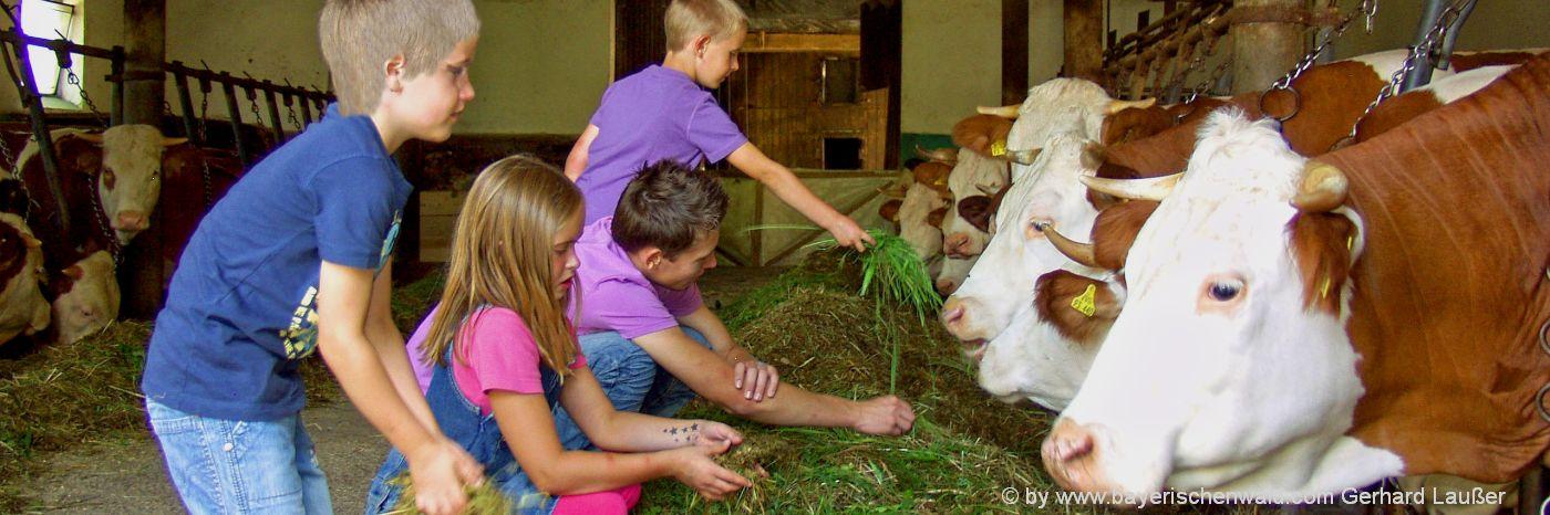 angebote-bauernhofurlaub-bayerischer-wald-kinderferien-kuhstall-mithelfen