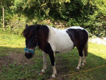 Bauernhof Reiturlaub in Bayern Pony