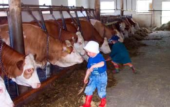 Urlaub auf dem Bauernhof bei Michelsneukirchen