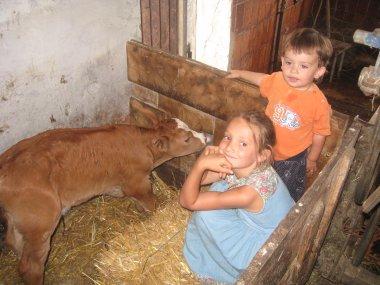 Kühe im Stall im Urlaub auf dem bauernhof bei Straubing