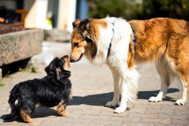 bauernhof-kerscher-erlebnis-bauernhof-urlaub-mit-hund