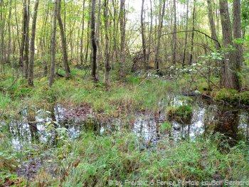 Naturschutzgebiet Prackendorfer / Kulzer Moos