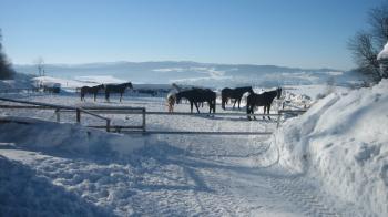 bauernhof-kroner-winterferien-kleinkinder-urlaub-reiturlaub