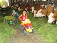 Familien Urlaub am Bauernhof mit Kinderbetreuung beim Tiere füttern