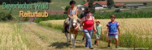 bayerischer-wald-reiturlaub-bayern-ponyreiten-reiterferien