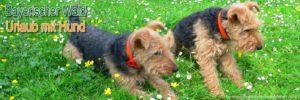 bayerischer-wald-urlaub-mit-hunde-willkommen-hundefreundlic