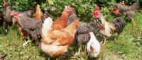 Bauernhofurlaub mit vielen Tieren