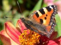 bayern-natururlaub-blumenbilder-200-pixel-foto
