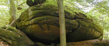 Bild Froschmaul im Falkenstein Schlosspark - Wander Touren Bayern