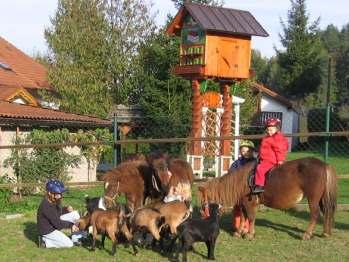 Pferdehof und Ferienhof im Bayerwald