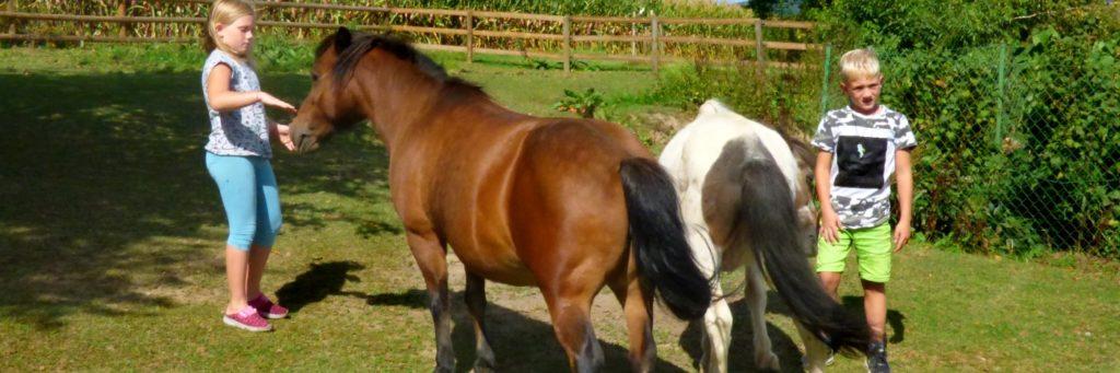 Bayerischer Wald Kinderhotel mit Ponyreiten in Bayern - Familienhotels mit Pferden
