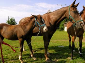 fuchsenhof-reiturlaub-pferde-ponys-reitabzeichen-urlaub