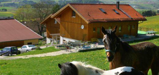 gammerhof-bauernhof-waldkirchen-ferienhaus-reiterhof