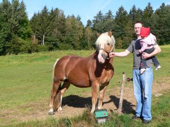 Bauernhofurlaub Sommer Reiturlaub mit Pferden