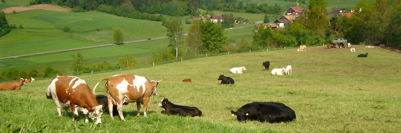 Bauernhof Urlaub in Chamerau Ferienwohnungen familienfreundliche Preise in Bayern